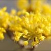 splash yellow,