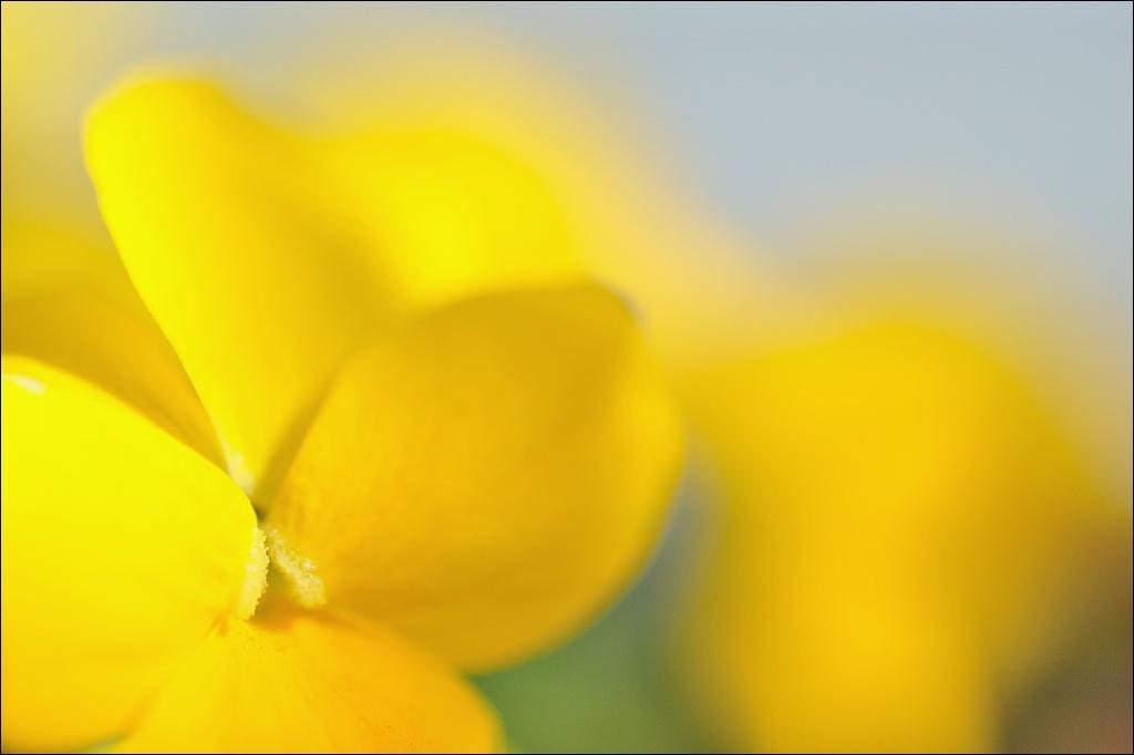 春.u.ra.ra