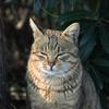 鋭い目つきの猫