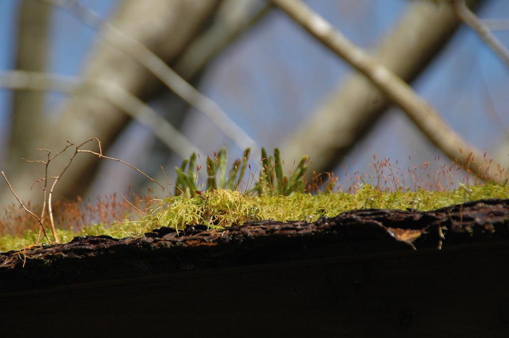 建物の上に芽をだした植物