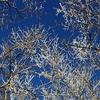 九重の樹氷