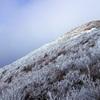 大船山の樹氷