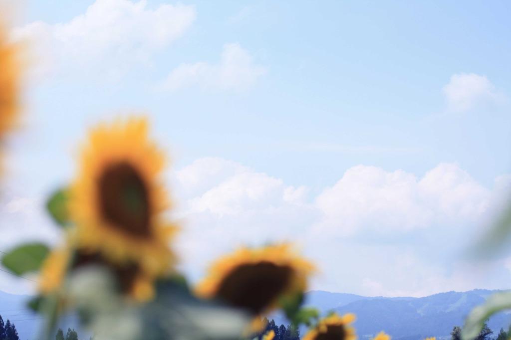 夏空〜ひまわりのある風景 其の六