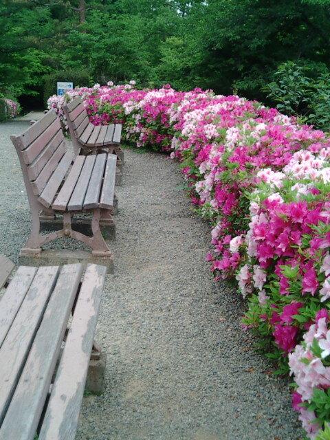 ベンチと花