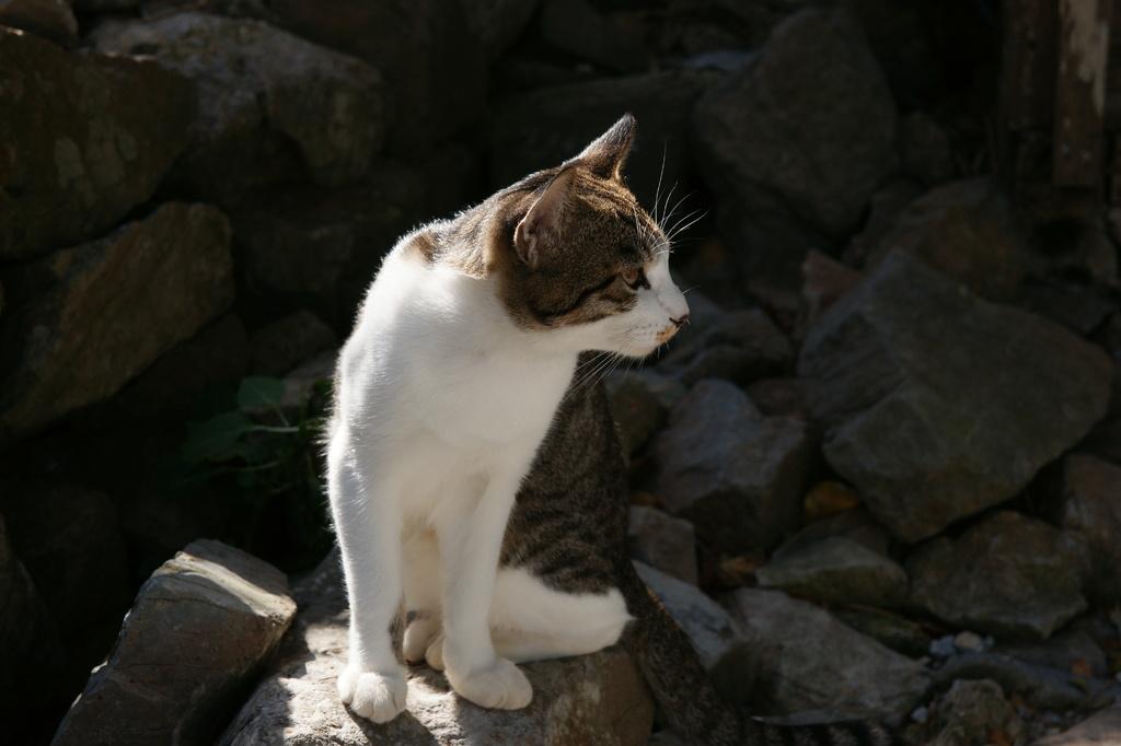 okinawa010