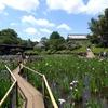 松戸市の本土寺 菖蒲園木道