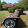 柏の葉公園の新緑6(2009_0419GX200)