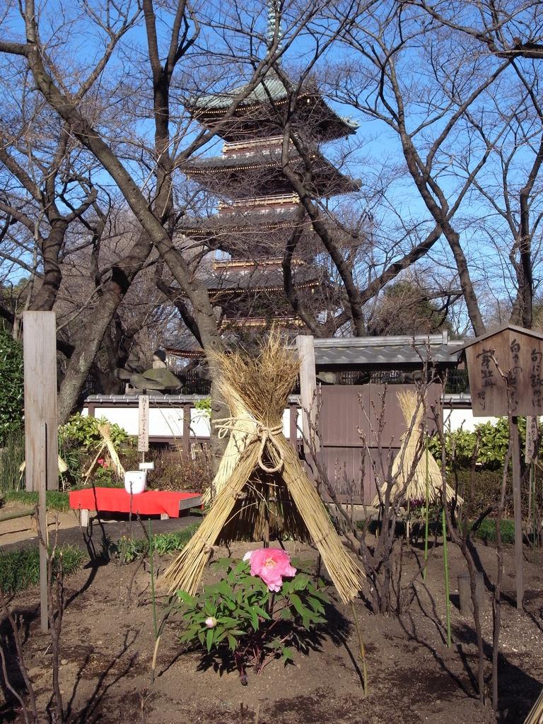 2009_0103GX200上野ぼたん園2