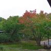 秋、色付き始める