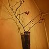 綺麗な枯れ木