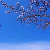 美貌の青空