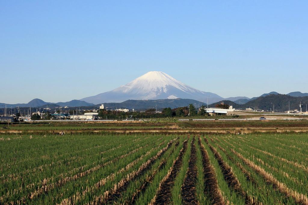 文化の日の富士