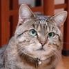 愛猫 うめぼし