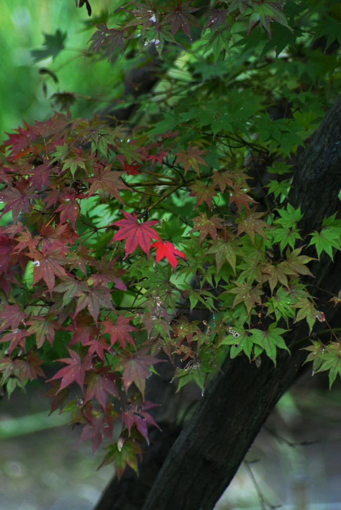 秋色一番乗り