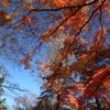 多聞院(埼玉県所沢市)の紅葉