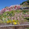 花桃の咲く里