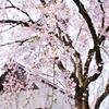 桜と武家屋敷