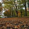 葉っぱの絨毯