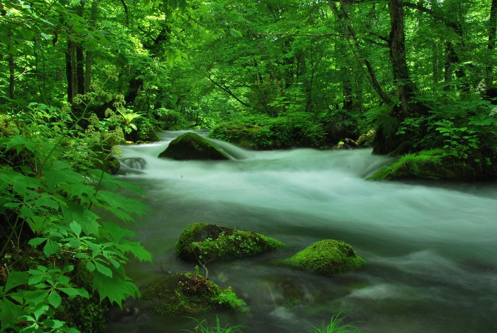 自然と調和する日
