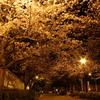 夜桜デート☆