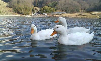 田舎の池にて