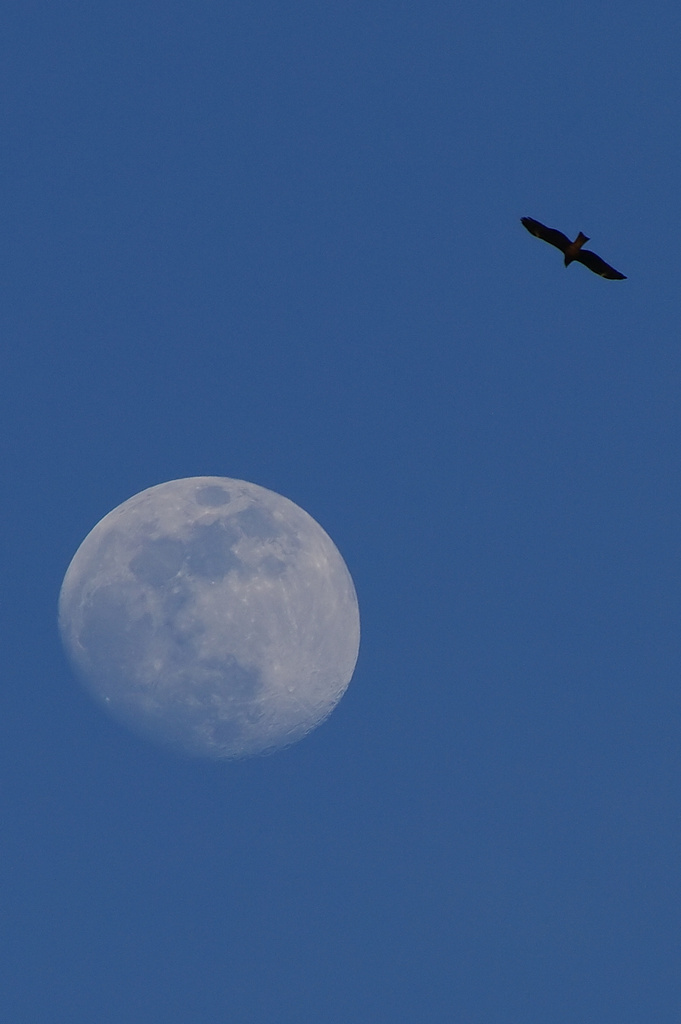 a kite and the moon
