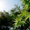 新緑の日光浴