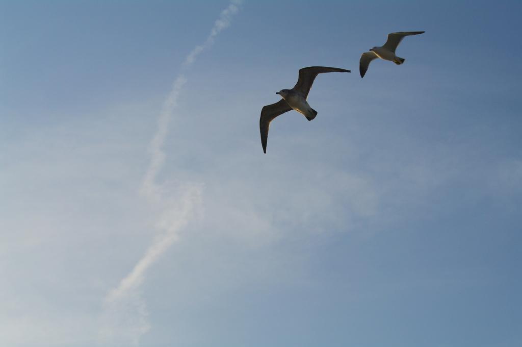 sail across the sky