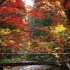 小国神社紅葉