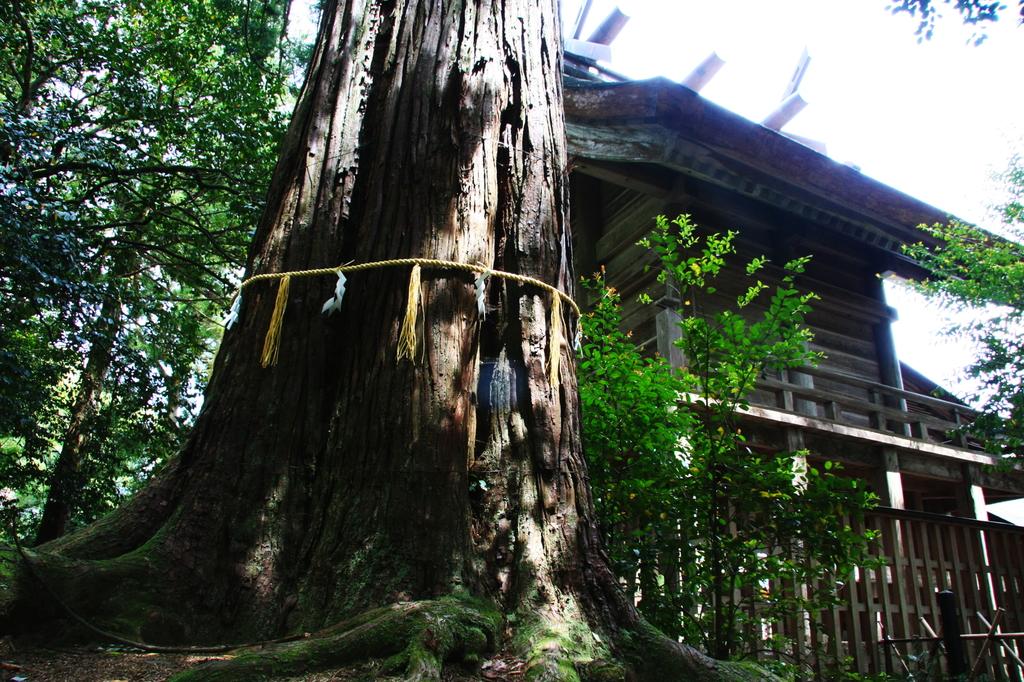 須佐の千年杉