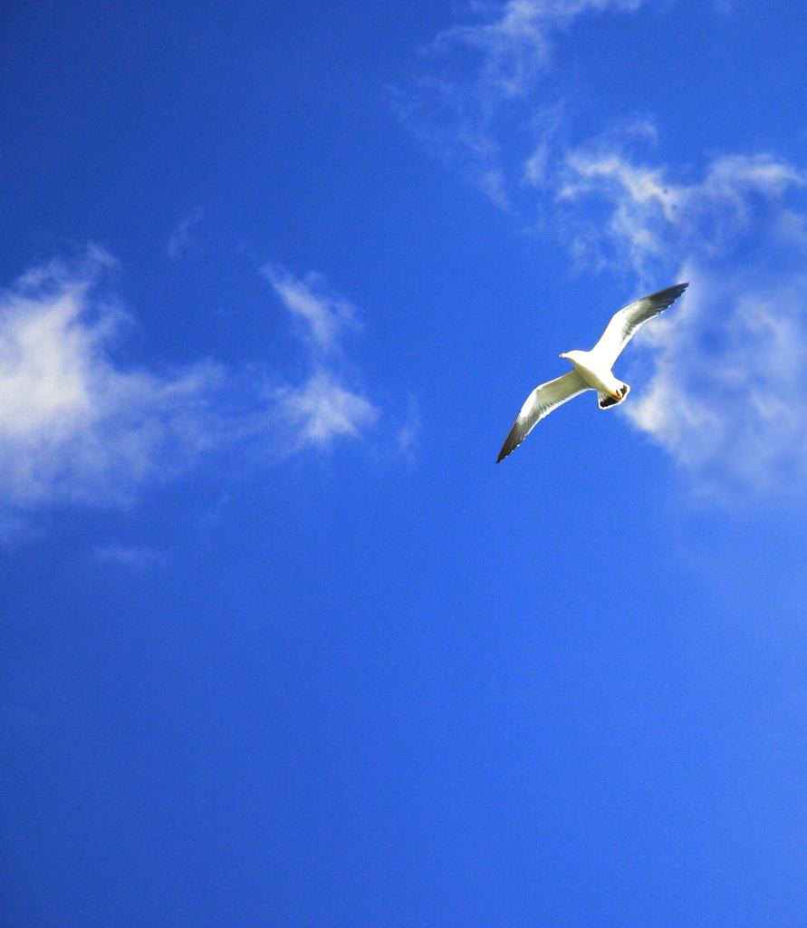 翼を広げて。。。