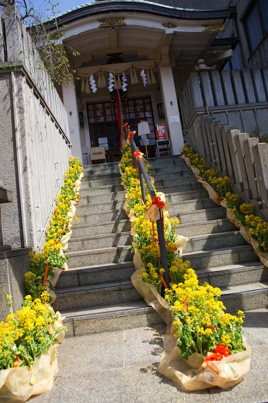 菜の花の階段