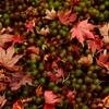 苔と枯れ紅葉
