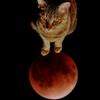 皆既月食と月面着陸