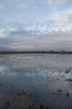 冬の田んぼが空を見る。