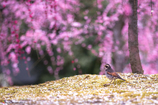 春の光の中で
