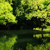 Reflection of Green...