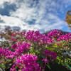 寒空に似合わない色の花(^_^;)