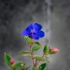 地味に目立つ・・路傍の花