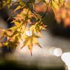 秋色に輝く時・・