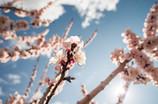 桜は、まだかいなぁ~っ♪