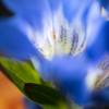 青く燃える・・花