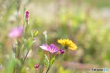 野辺に腰をおろせば初夏の風・・