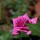 路傍の彩り・・秋の薔薇
