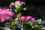 季節を呼ぶ花・・