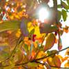好天の秋の陽射しは、ちょっと寂しいかも・・