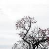 真冬の柿・・今日は冬景色
