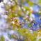 光と風と・・爽やかに春 (⌒▽⌒)b