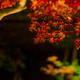 秋の名残 夜の彩り・・