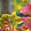 秋色花壇に花は・・なしっ
